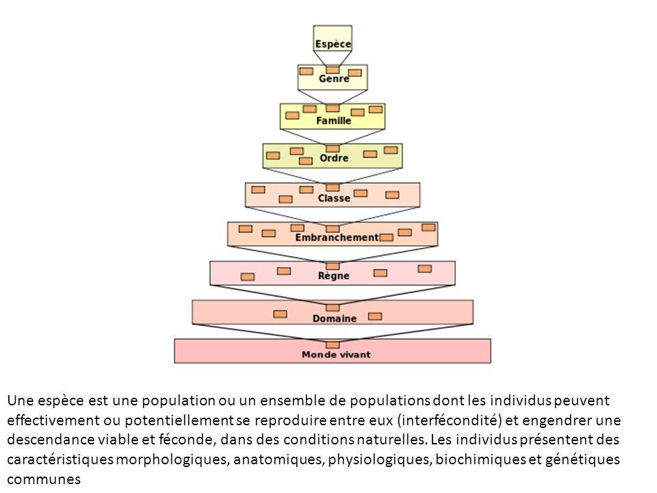 Une espèce est une population ou un ensemble de populations dont les individus peuvent effectivement ou potentiellement se reproduire entre eux (interfécondité) et engendrer une descendance viable et féconde, dans des conditions naturelles.