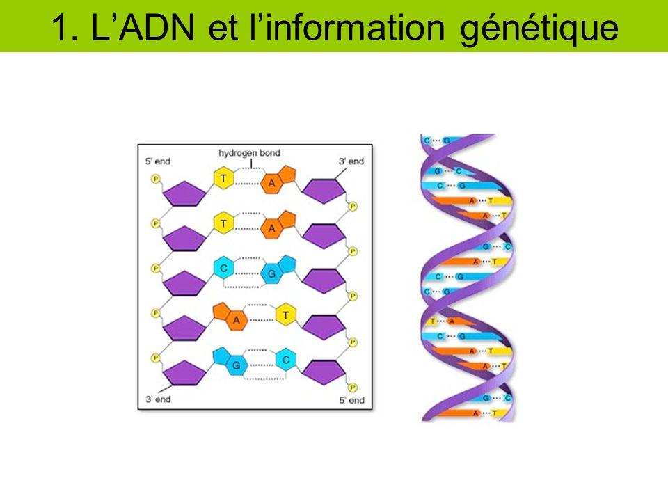 1. L'ADN et l'information génétique