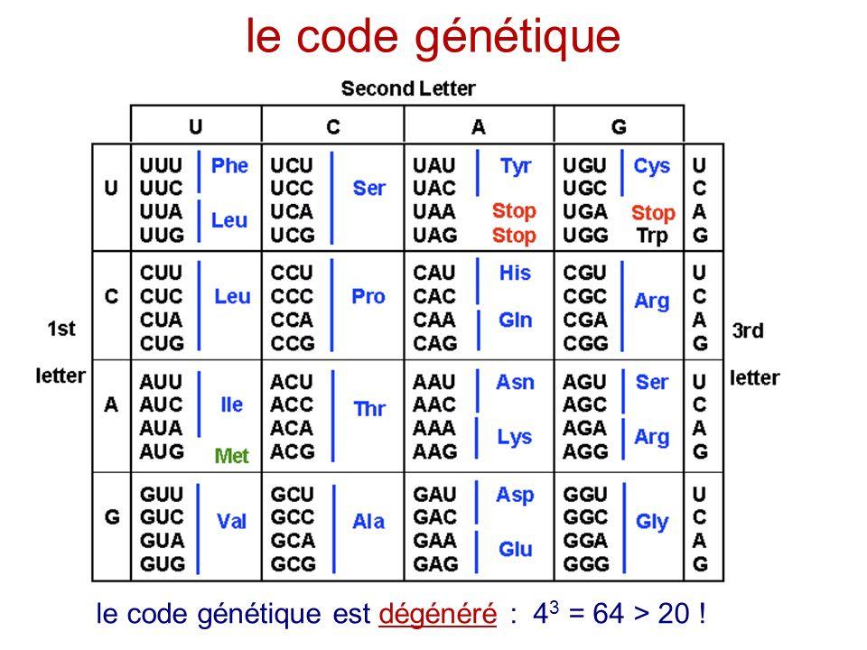 le code génétique le code génétique est dégénéré : 43 = 64 > 20 !