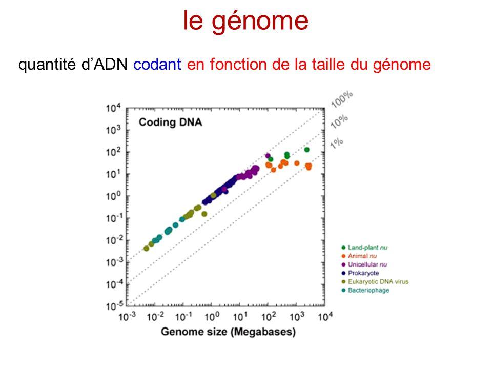 le génome quantité d'ADN codant en fonction de la taille du génome