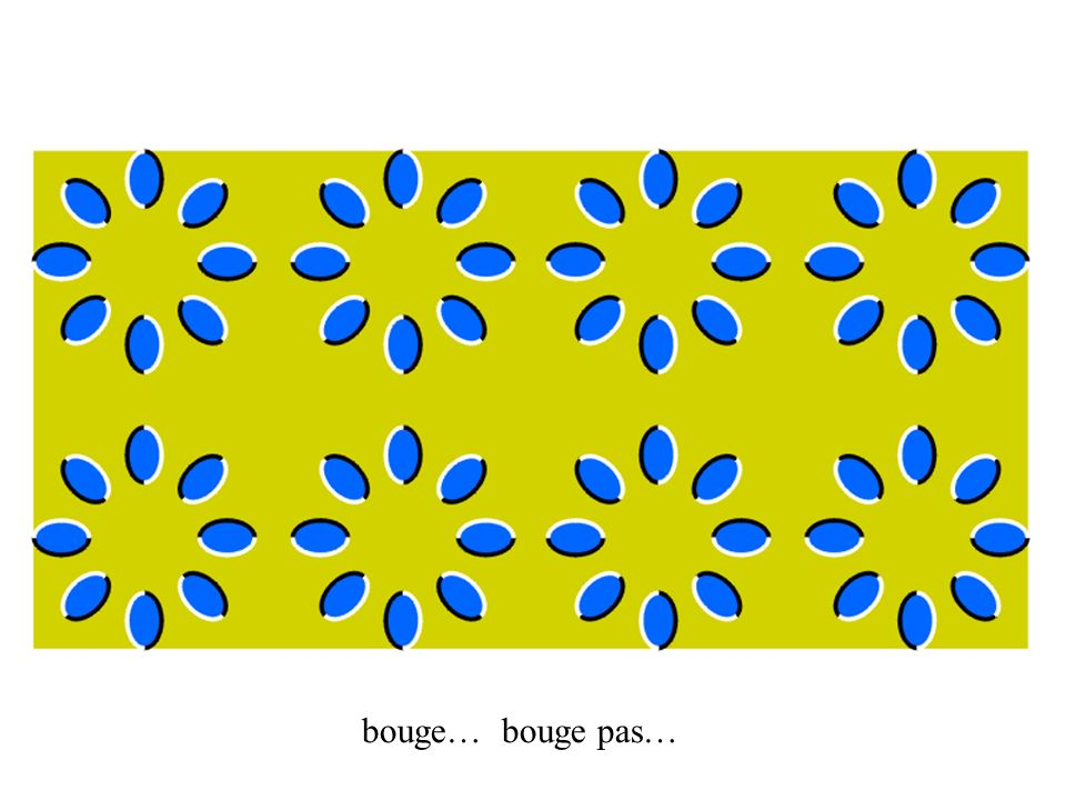 bouge… bouge pas…