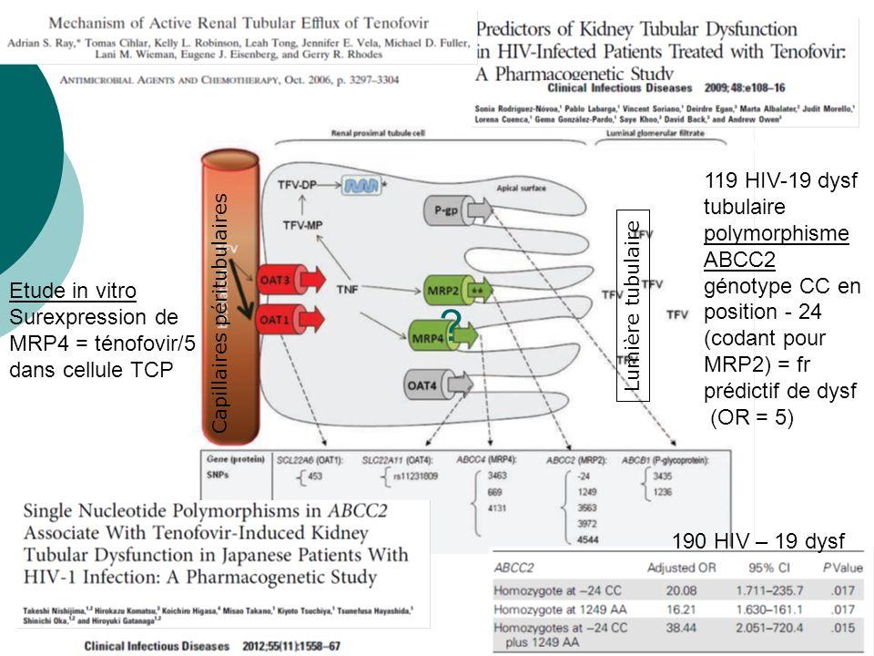119 HIV-19 dysf tubulaire polymorphismeABCC2 génotype CC en