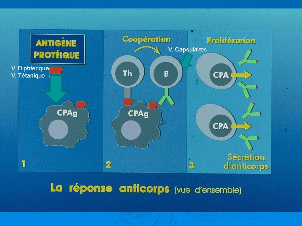 V. Capsulaires V. Diphtérique V. Tétanique
