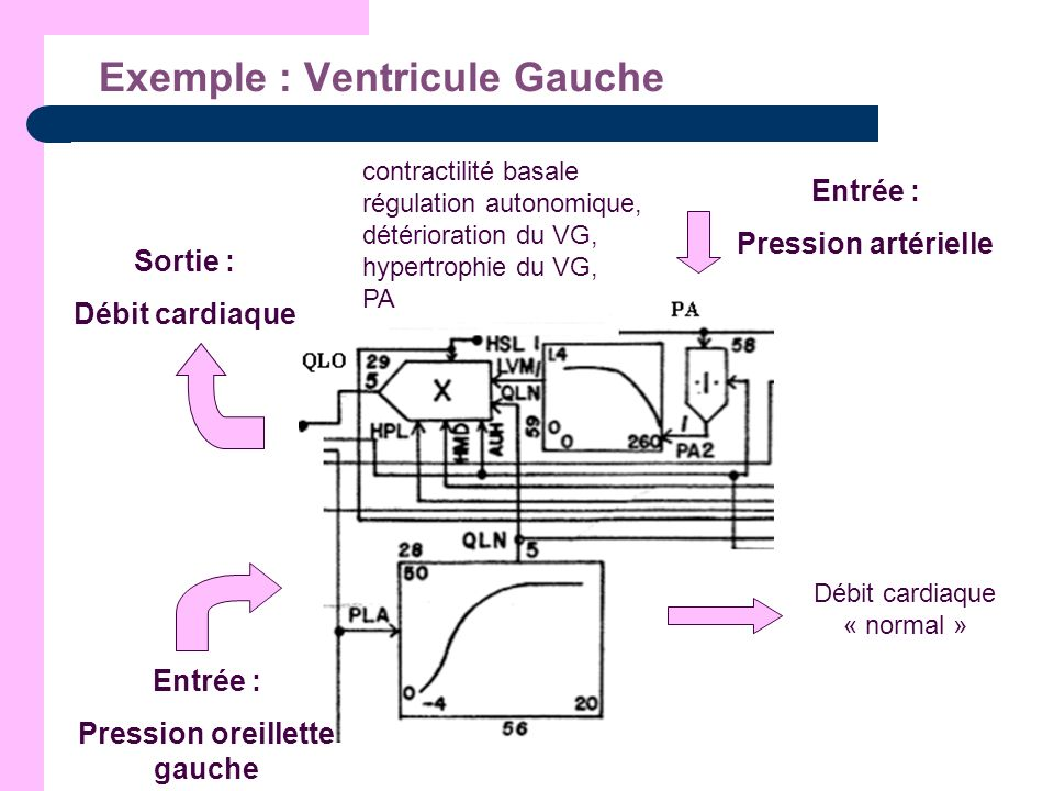 Exemple : Ventricule Gauche