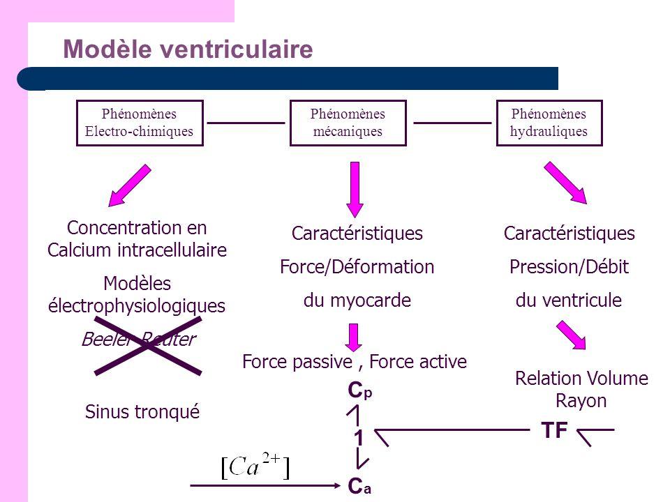 Modèle ventriculaire Cp TF 1 Ca Caractéristiques Pression/Débit