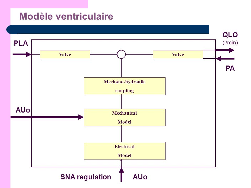 Modèle ventriculaire PLA QLO (l/min) PA AUo SNA regulation Valve Valve