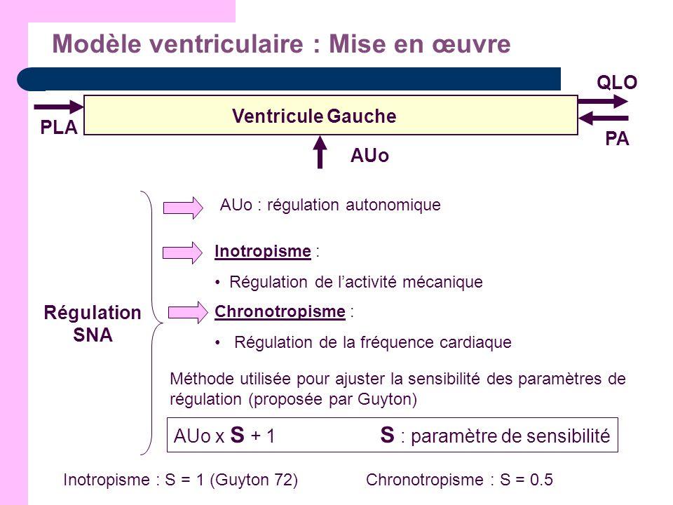 Modèle ventriculaire : Mise en œuvre