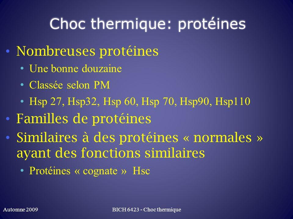 Choc thermique: protéines