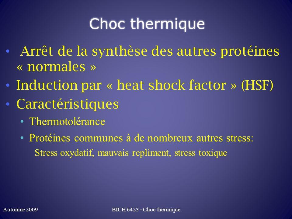 Choc thermique Arrêt de la synthèse des autres protéines « normales »