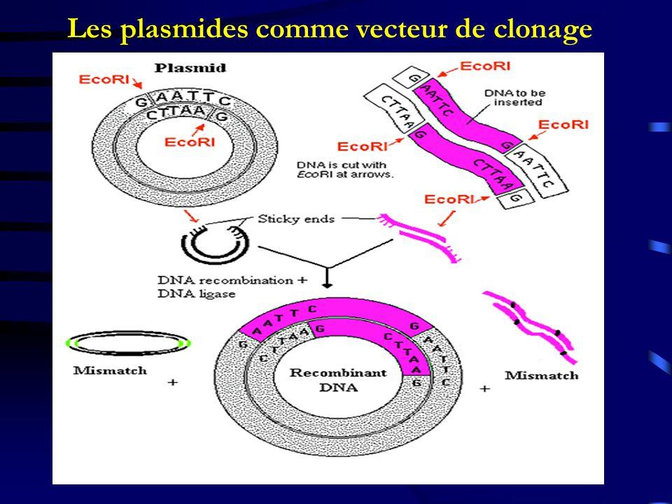 Les plasmides comme vecteur de clonage