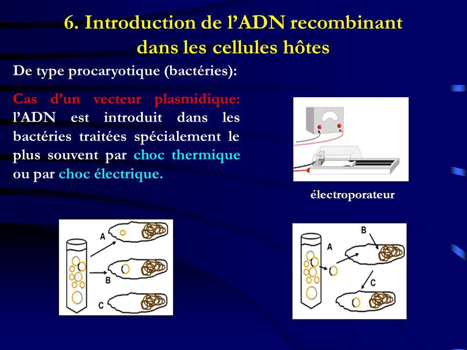 6. Introduction de l'ADN recombinant dans les cellules hôtes