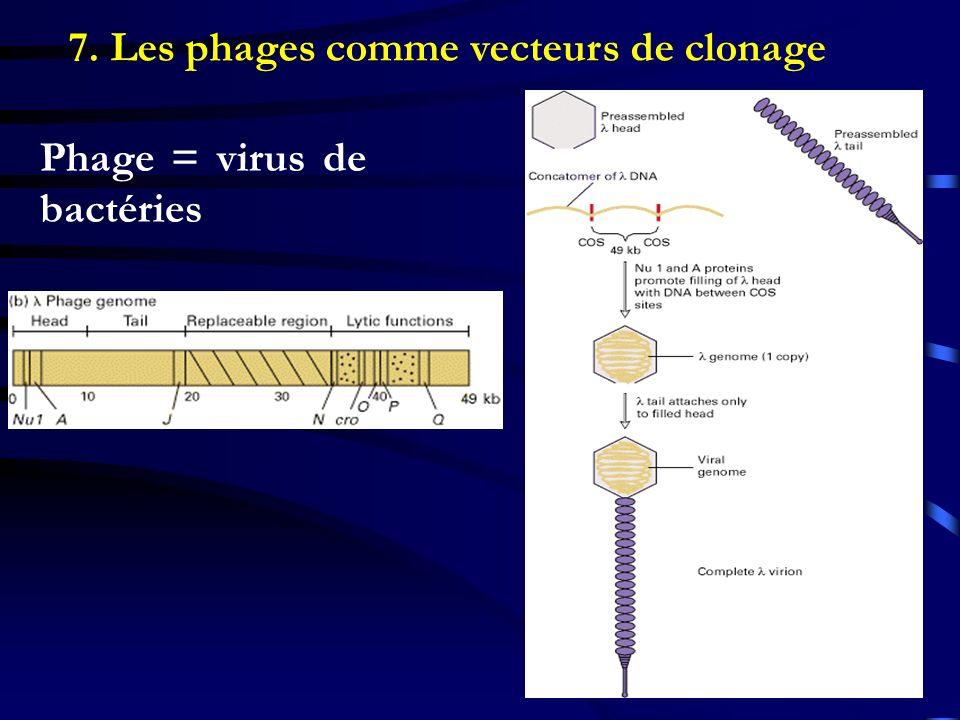 7. Les phages comme vecteurs de clonage