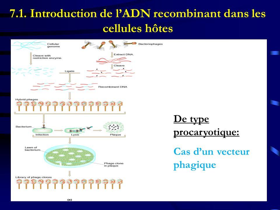7.1. Introduction de l'ADN recombinant dans les cellules hôtes