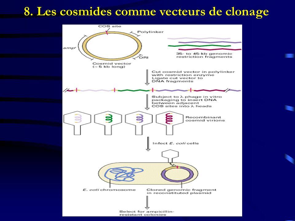 8. Les cosmides comme vecteurs de clonage