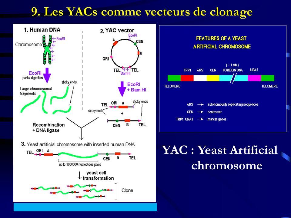 9. Les YACs comme vecteurs de clonage
