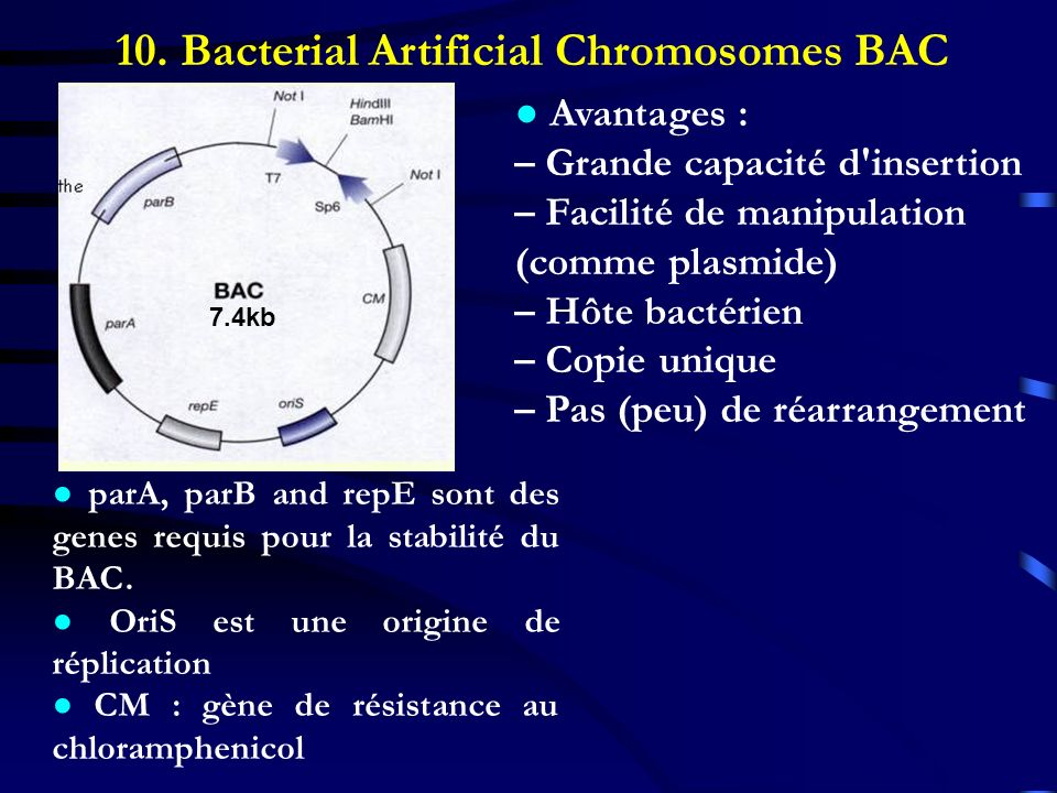 10. Bacterial Artificial Chromosomes BAC