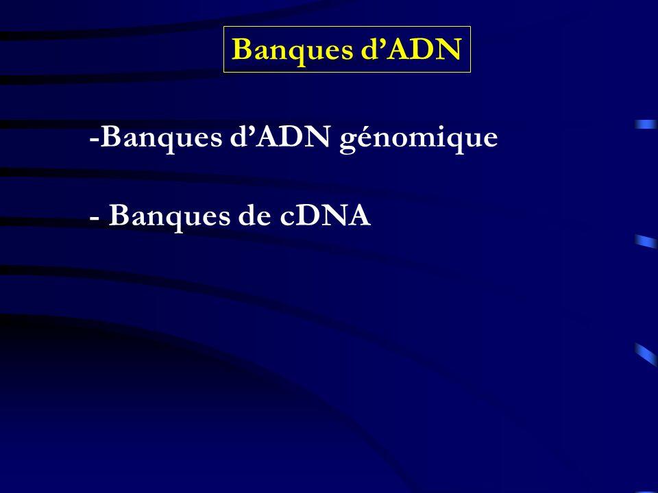 Banques d'ADN -Banques d'ADN génomique - Banques de cDNA