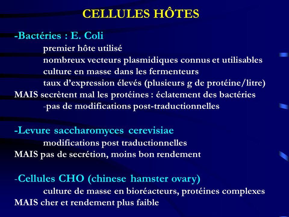 CELLULES HÔTES -Bactéries : E. Coli -Levure saccharomyces cerevisiae