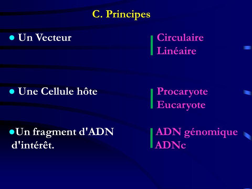 C. Principes ● Un Vecteur Circulaire. Linéaire. ● Une Cellule hôte Procaryote.