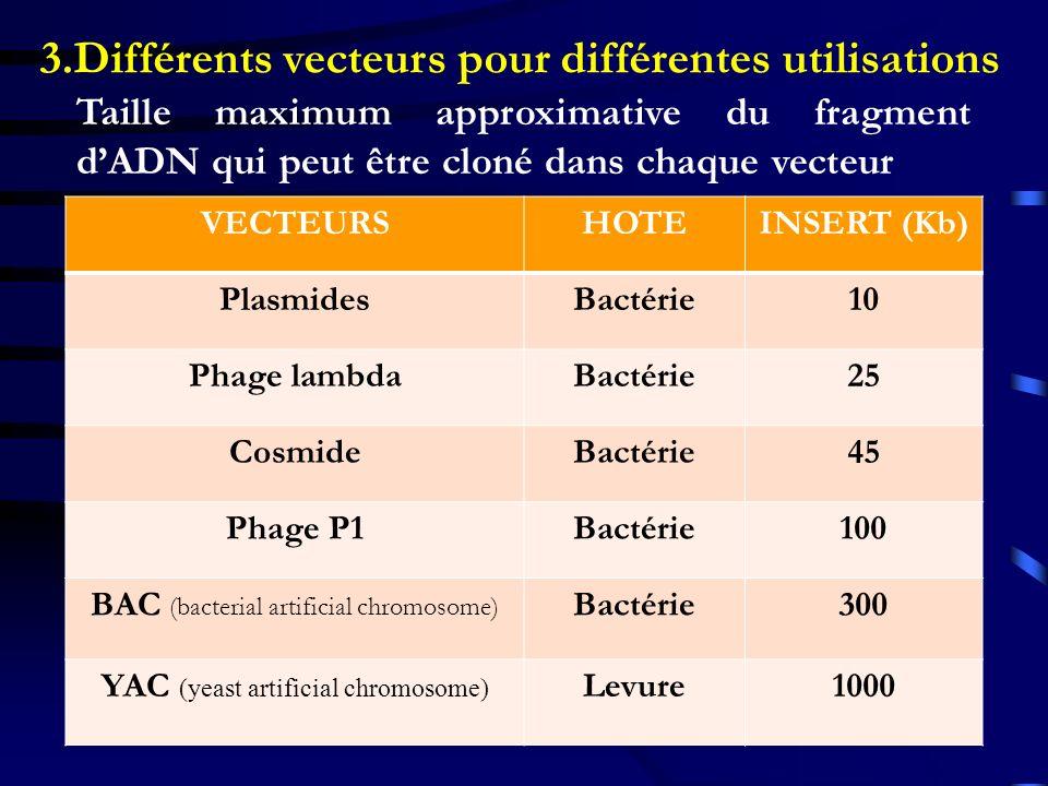 3.Différents vecteurs pour différentes utilisations