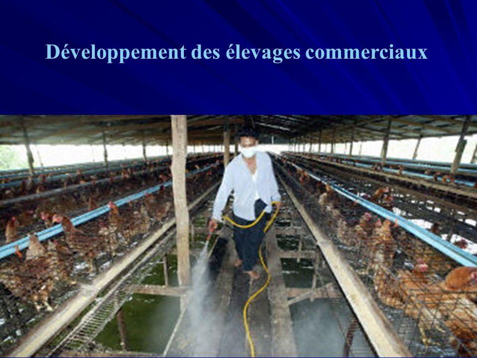 Développement des élevages commerciaux
