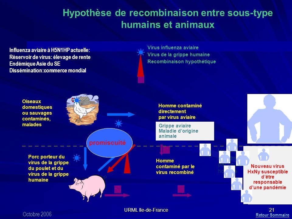 Hypothèse de recombinaison entre sous-type humains et animaux
