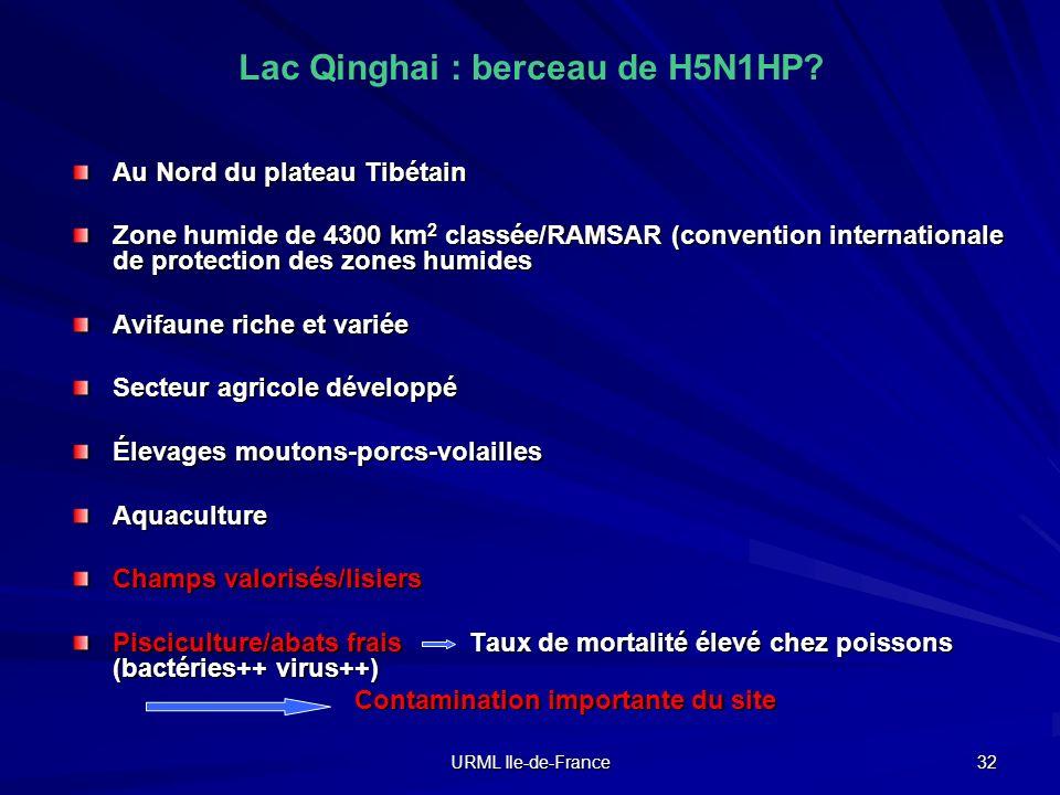 Lac Qinghai : berceau de H5N1HP