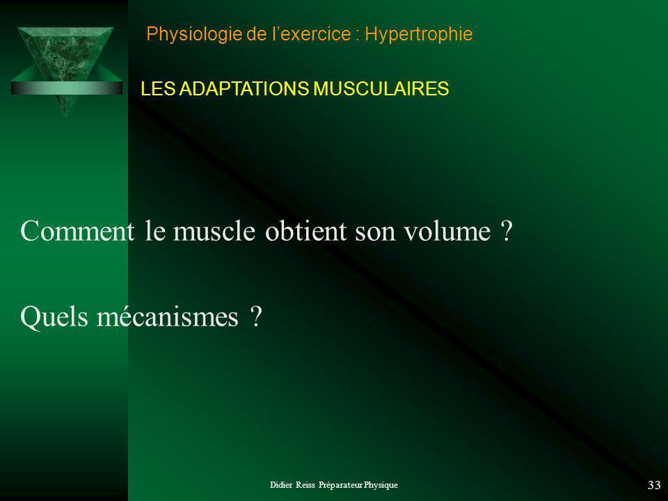 Physiologie de l'exercice : Hypertrophie