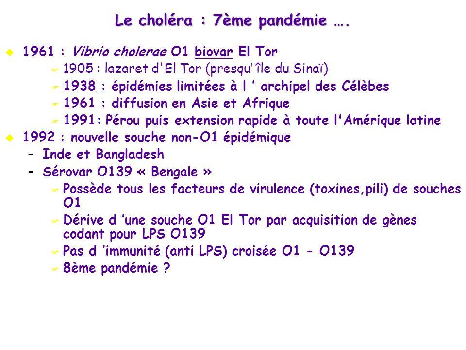 Le choléra : 7ème pandémie ….