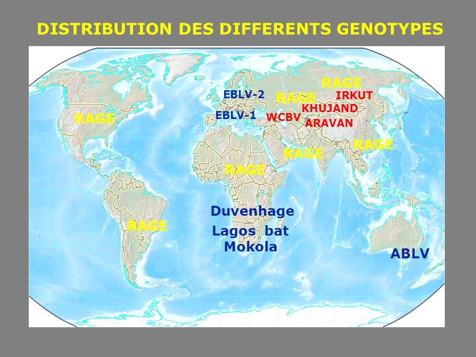 DISTRIBUTION DES DIFFERENTS GENOTYPES