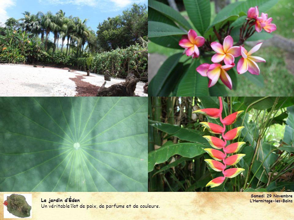 Samedi 29 Novembre L'Hermitage-les-Bains. Le jardin d'Éden. Un véritable îlot de paix, de parfums et de couleurs.