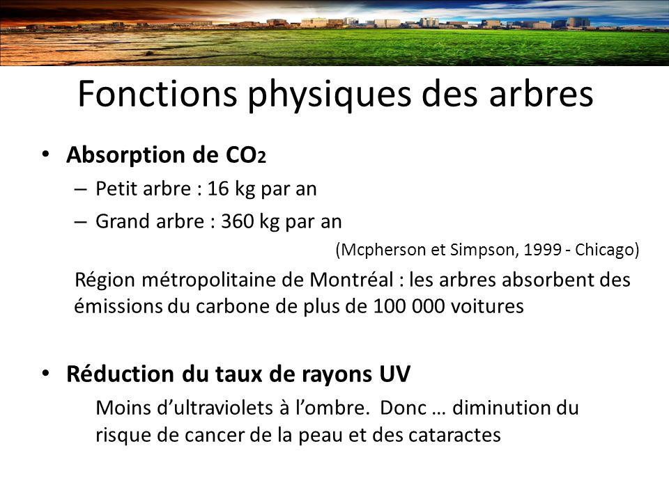 Fonctions physiques des arbres
