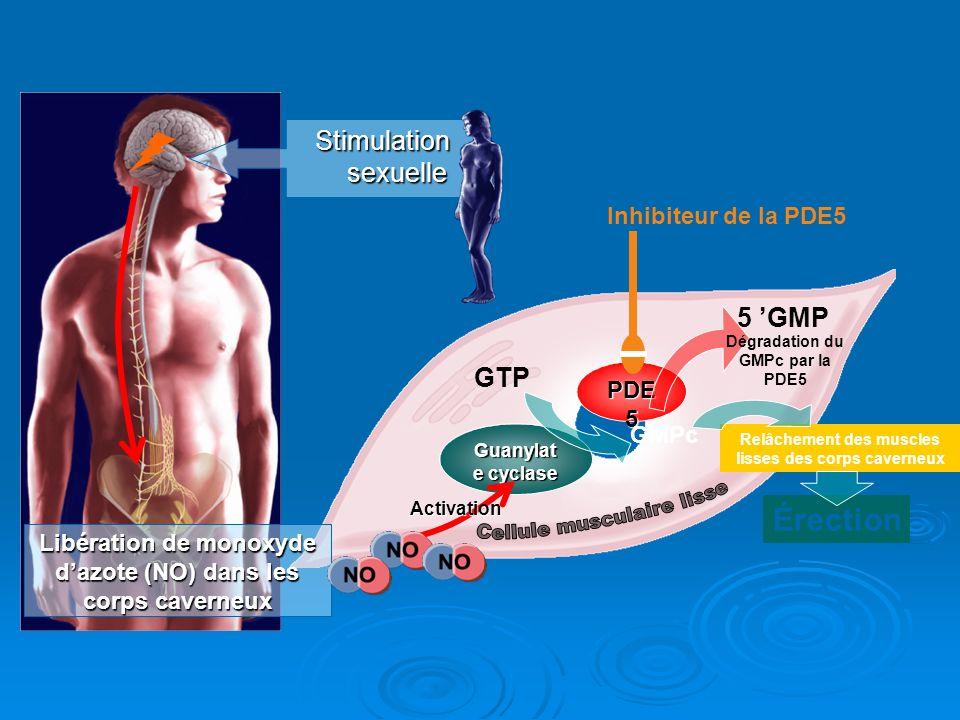 Dégradation du GMPc par la PDE5