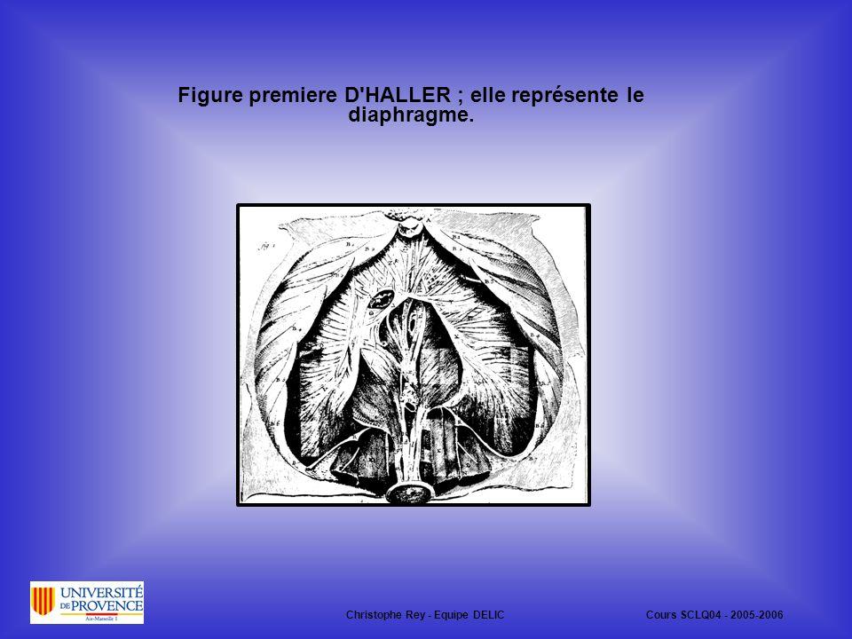 Figure premiere D HALLER ; elle représente le diaphragme.