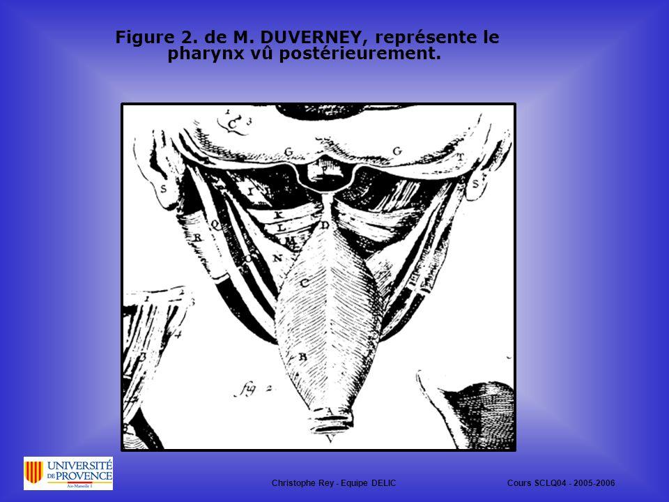 Figure 2. de M. DUVERNEY, représente le pharynx vû postérieurement.