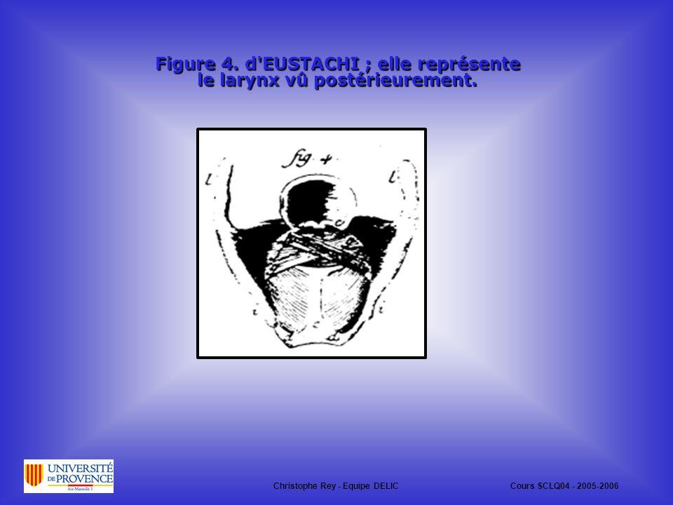 Figure 4. d EUSTACHI ; elle représente le larynx vû postérieurement.