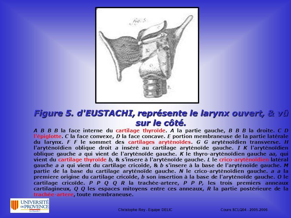 Figure 5. d EUSTACHI, représente le larynx ouvert, & vû sur le côté.