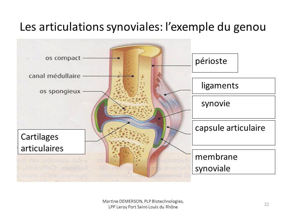 Les articulations synoviales: l'exemple du genou