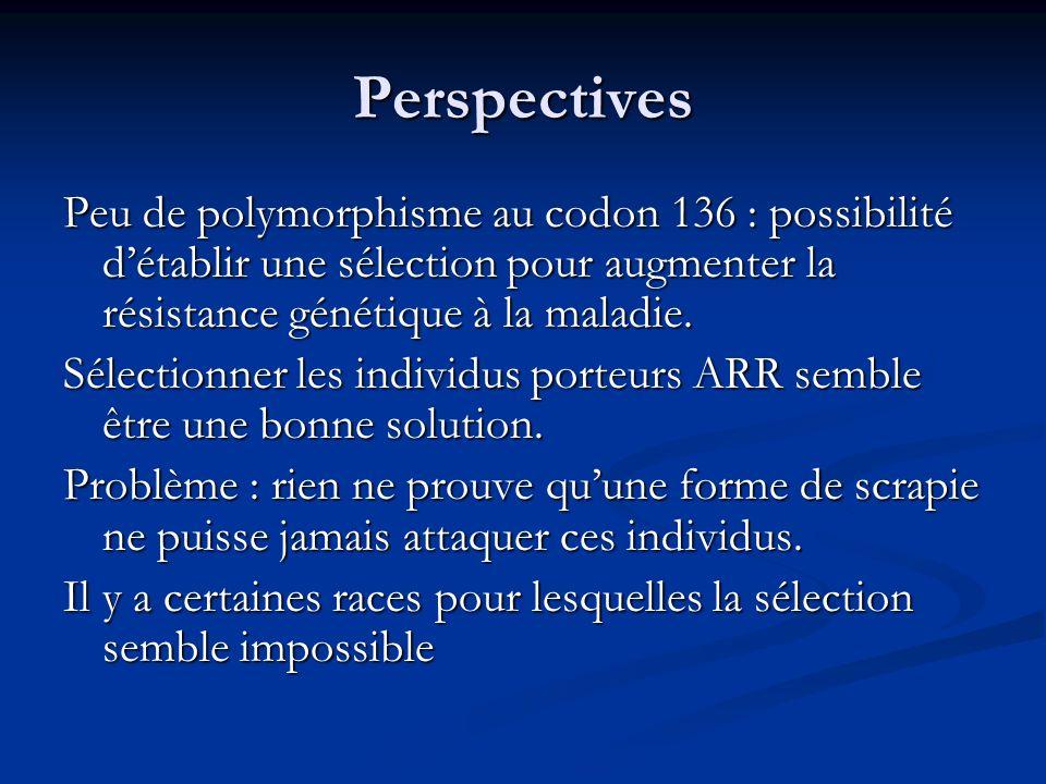 Perspectives Peu de polymorphisme au codon 136 : possibilité d'établir une sélection pour augmenter la résistance génétique à la maladie.