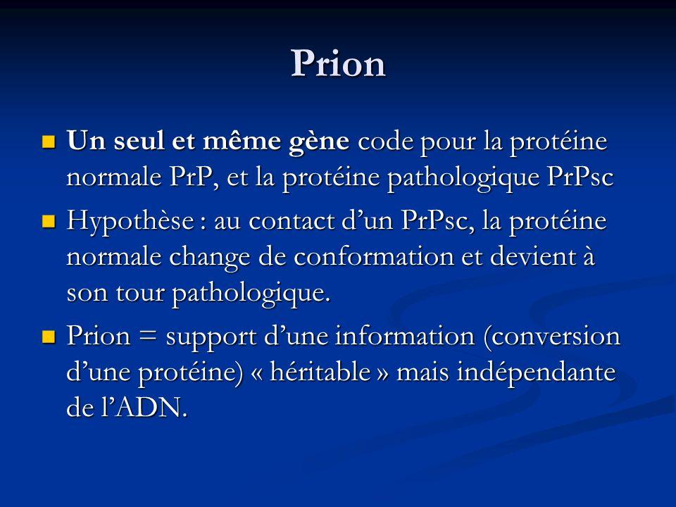 Prion Un seul et même gène code pour la protéine normale PrP, et la protéine pathologique PrPsc.
