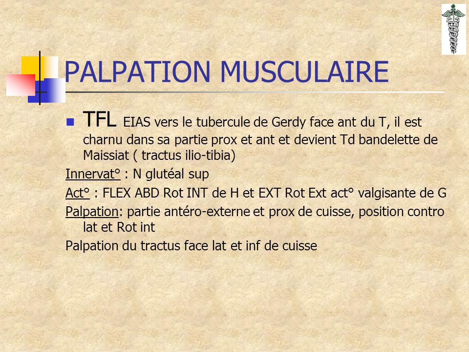 PALPATION MUSCULAIRE