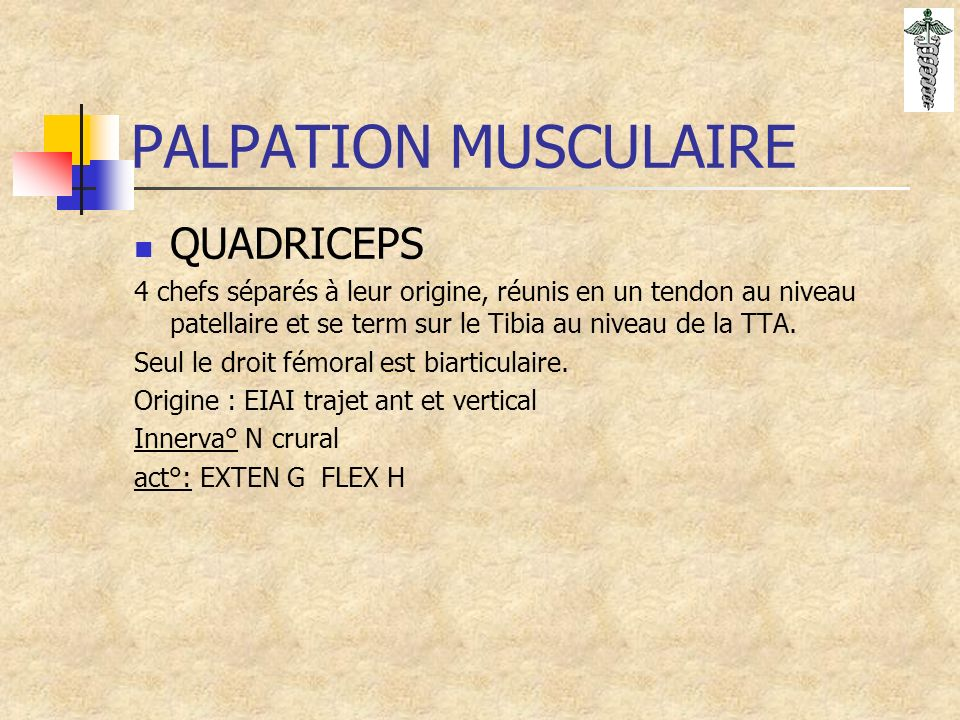 PALPATION MUSCULAIRE QUADRICEPS