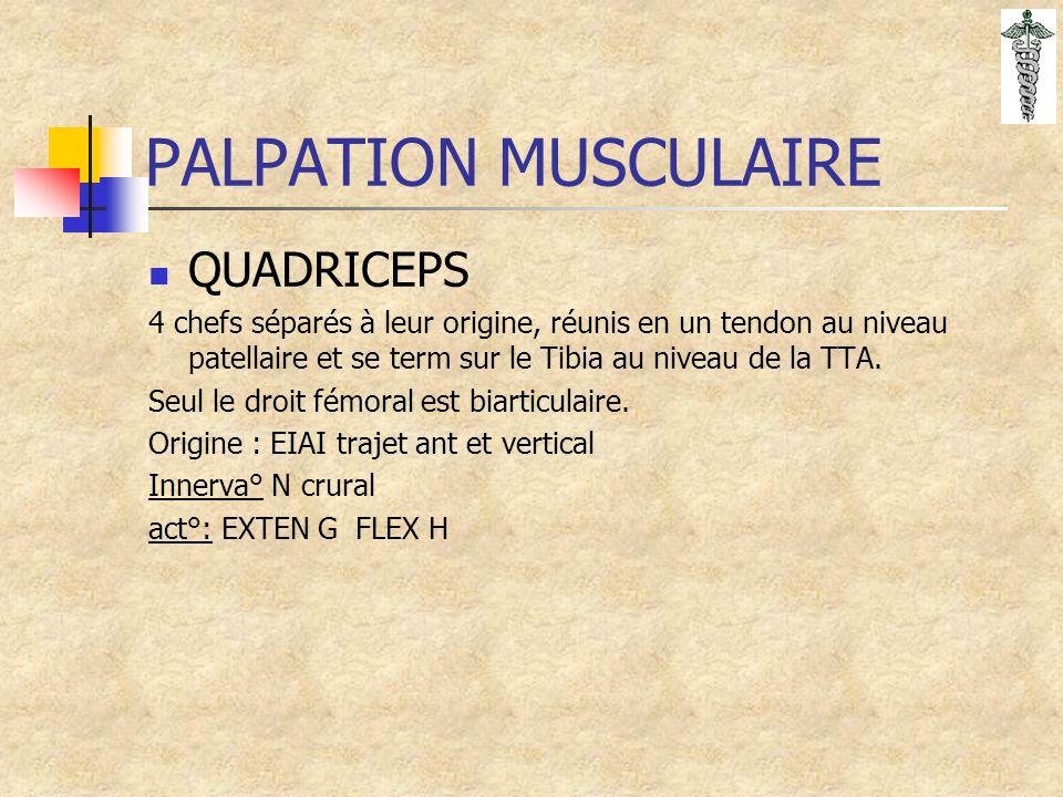 PALPATION MUSCULAIRE QUADRICEPS