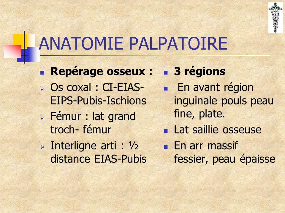 ANATOMIE PALPATOIRE Repérage osseux :