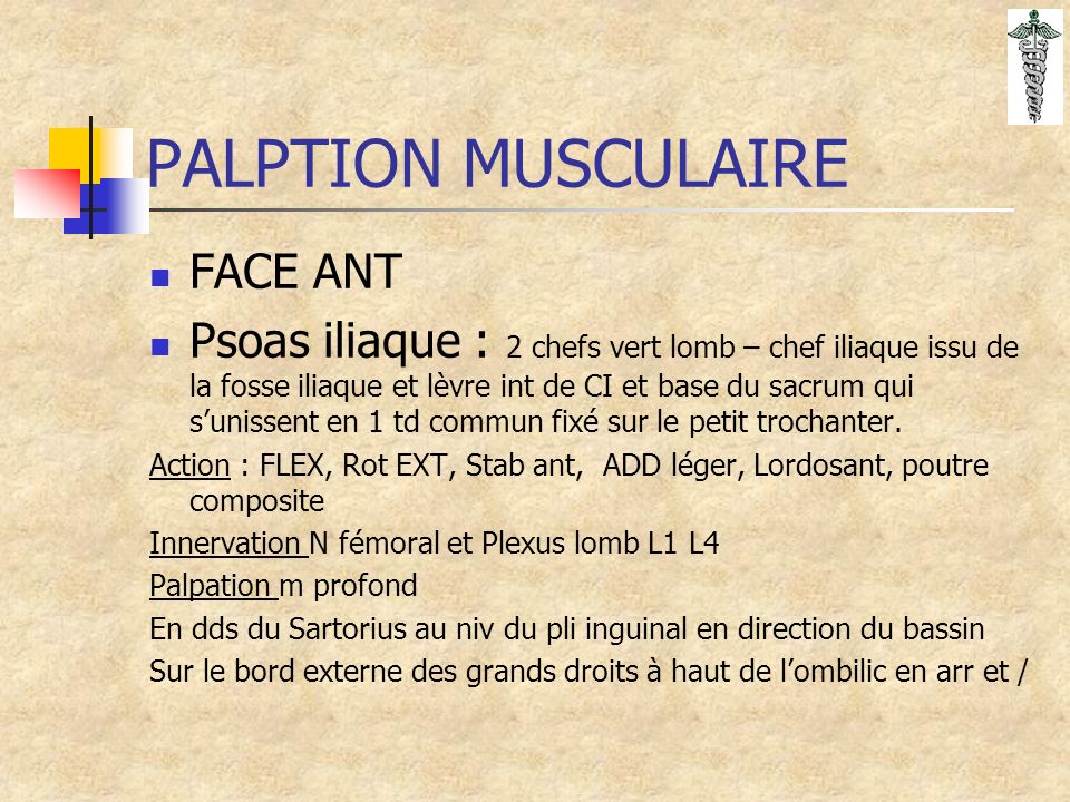PALPTION MUSCULAIRE FACE ANT