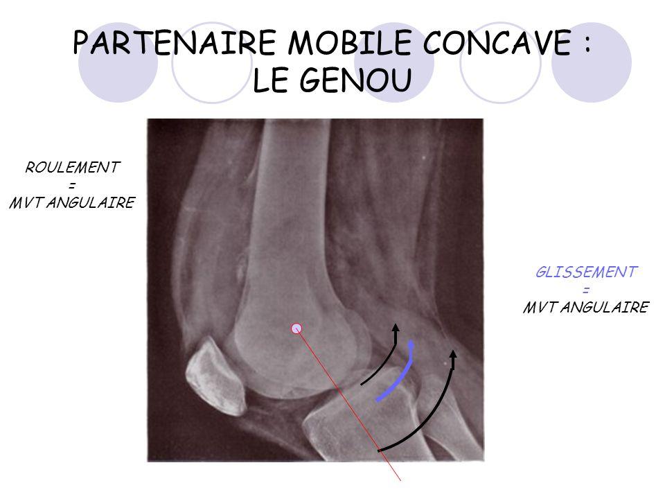 PARTENAIRE MOBILE CONCAVE : LE GENOU