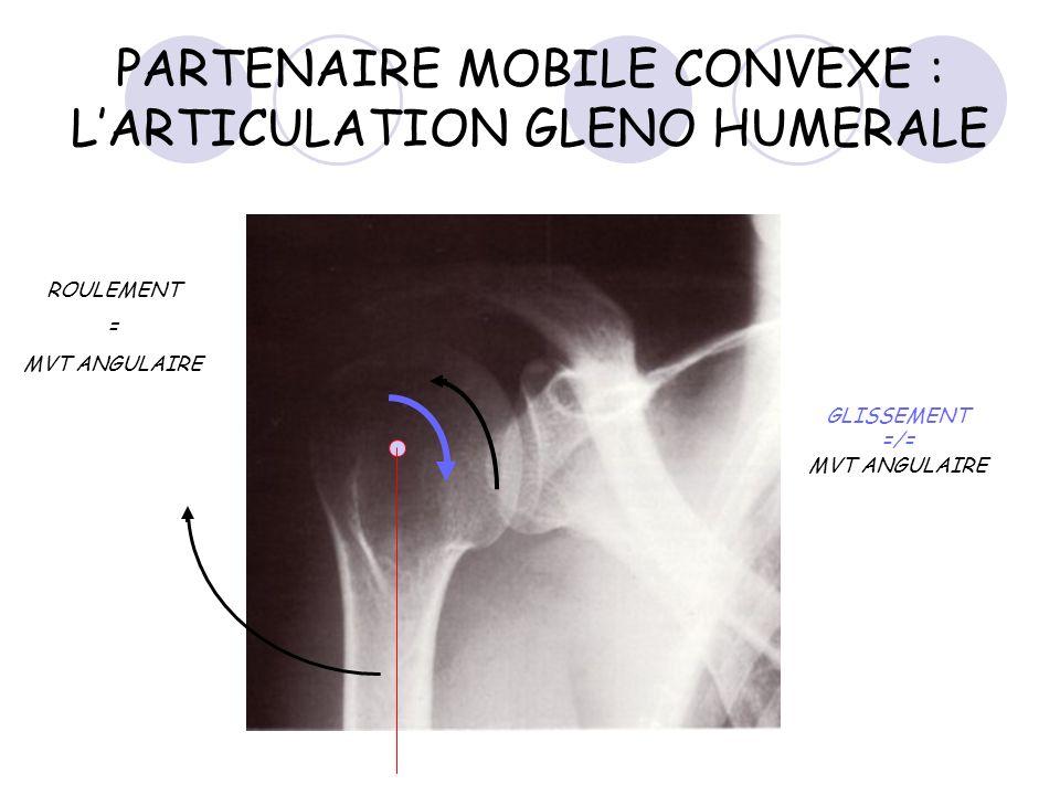 PARTENAIRE MOBILE CONVEXE : L'ARTICULATION GLENO HUMERALE