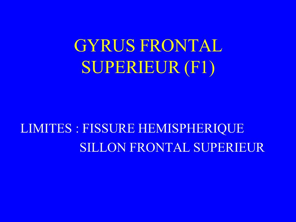 GYRUS FRONTAL SUPERIEUR (F1)