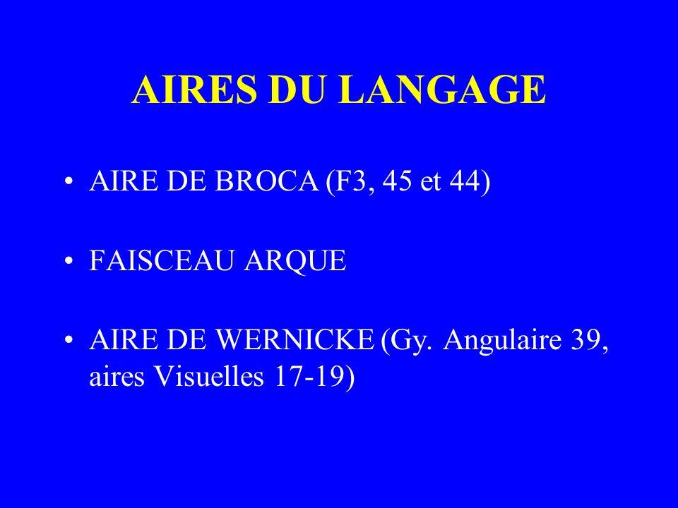AIRES DU LANGAGE AIRE DE BROCA (F3, 45 et 44) FAISCEAU ARQUE