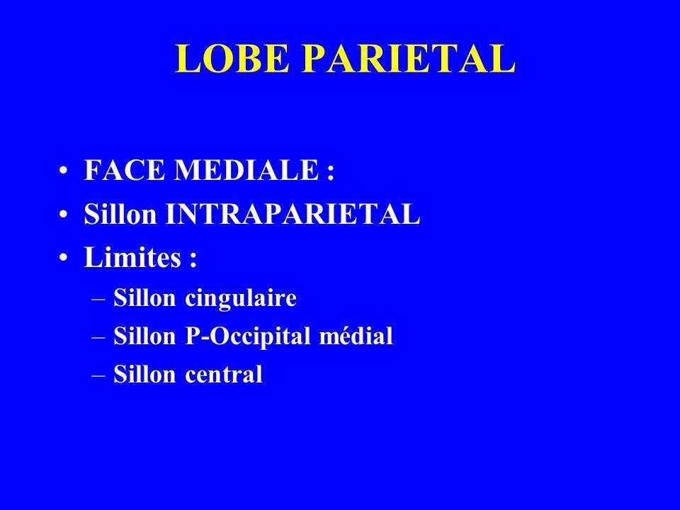 LOBE PARIETAL FACE MEDIALE : Sillon INTRAPARIETAL Limites :